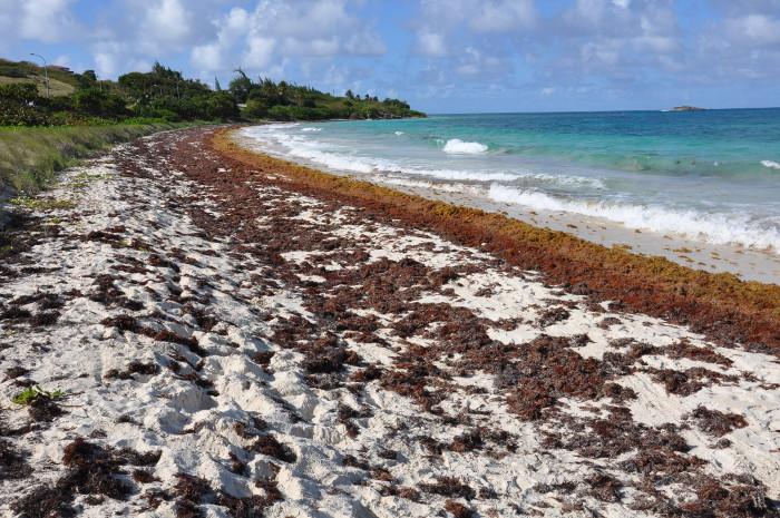 Por un manejo adecuado de pastos marinos en Camagüey