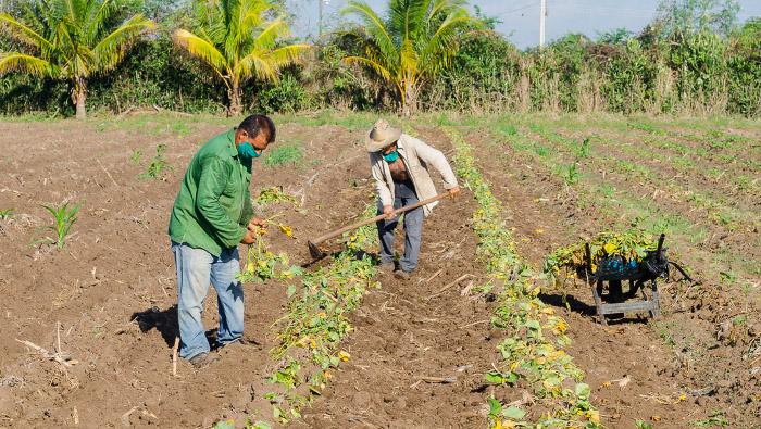 Agricultura, aporte consciente