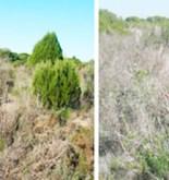 Las sequías alteran el suelo, aumentando las emisiones de CO2 4