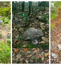 El Real Jardín Botánico estudia especies amenazadas en Guinea Ecuatorial 5