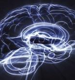 Un circuito cerebral se encarga de borrar memorias 5