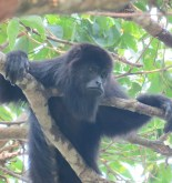 MÉXICO. Al rescate de los primates mexicanos 3