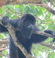 MÉXICO. Al rescate de los primates mexicanos 10
