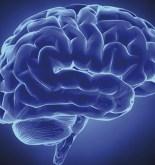 """""""El cerebro, con su experiencia privada y subjetiva, no se parece… 6"""