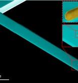 Una nueva técnica detecta bacterias y virus por su masa y su rigidez mecánica 6
