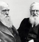 Wallace y Darwin, la extraña (e incompleta) coincidencia 4