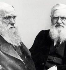 Wallace y Darwin, la extraña (e incompleta) coincidencia 9