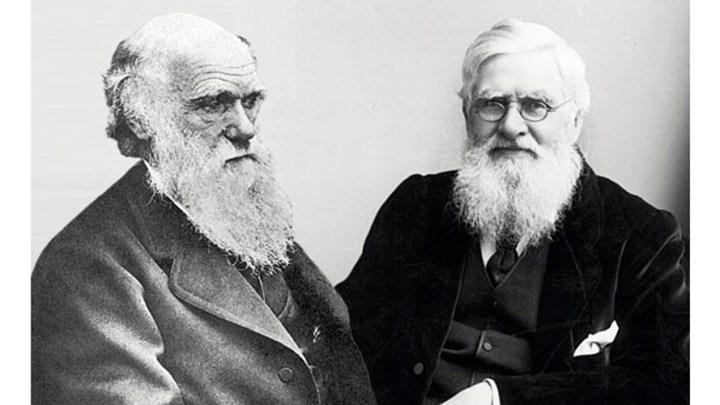 Darwin-y-Wallace