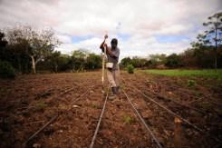 Agricultor trabajando en un campo de frijoles en Nicaragua/Neil Palmer (CIAT), CC BY-SA 2.0 , via Wikimedia Commons