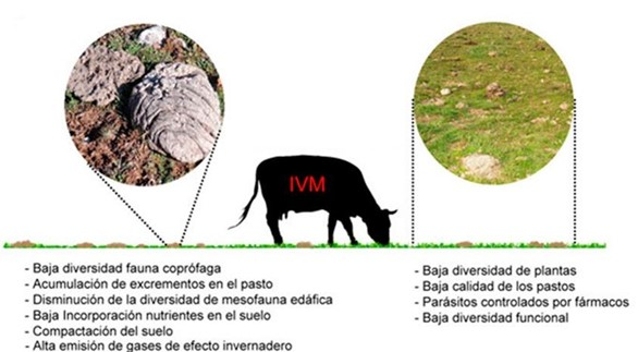 El principal problema de la ivermectina es su impacto ambiental, ya que los residuos que se vierten al medio terrestre son muy tóxicos. Altera la diversidad de especies en todos los niveles tróficos