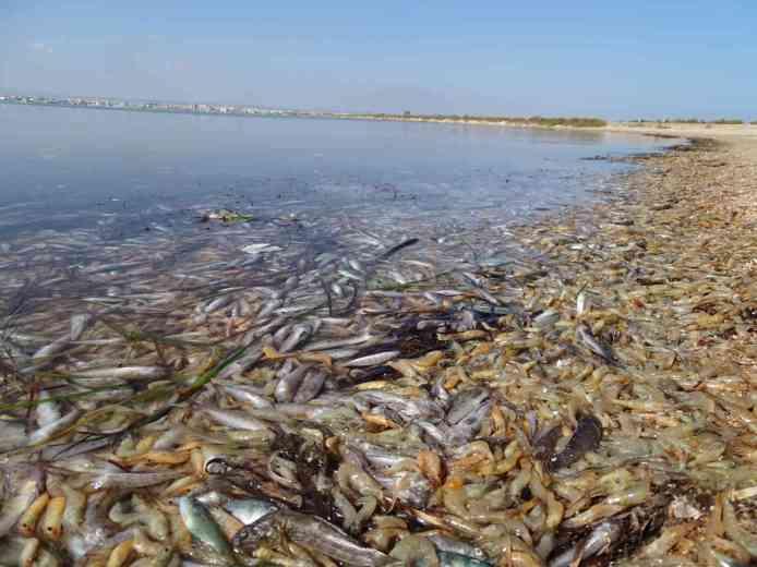 El Mar Menor de Murcia (foto ANSE)