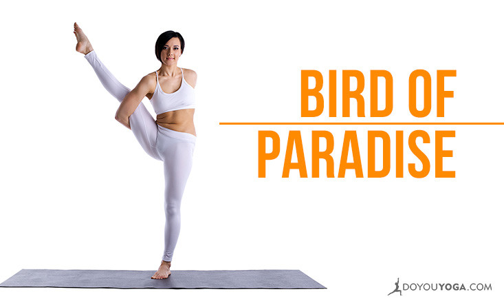 bird of paradise pose