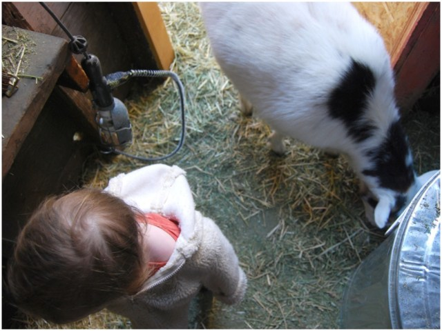 A Denver Home Companion | toddler and goat