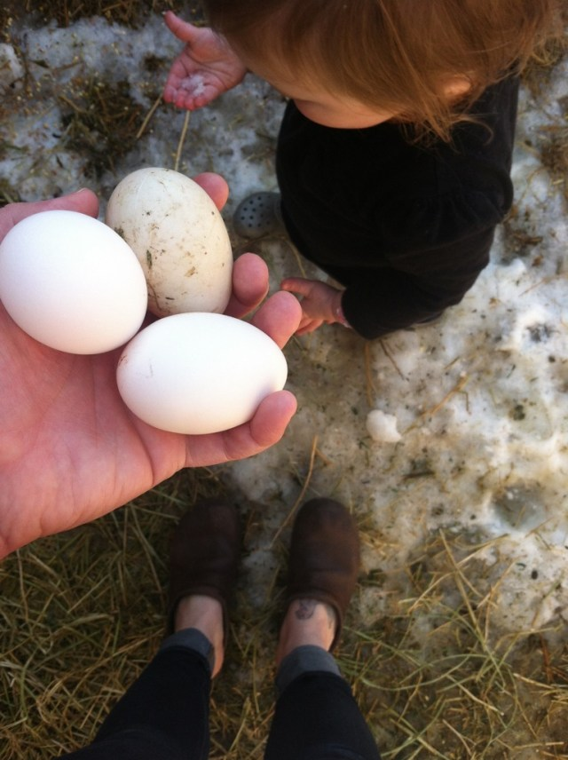 A Denver Home Companion | chicken eggs