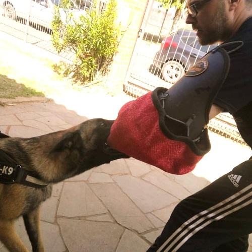 adestramento curso cao de guarda
