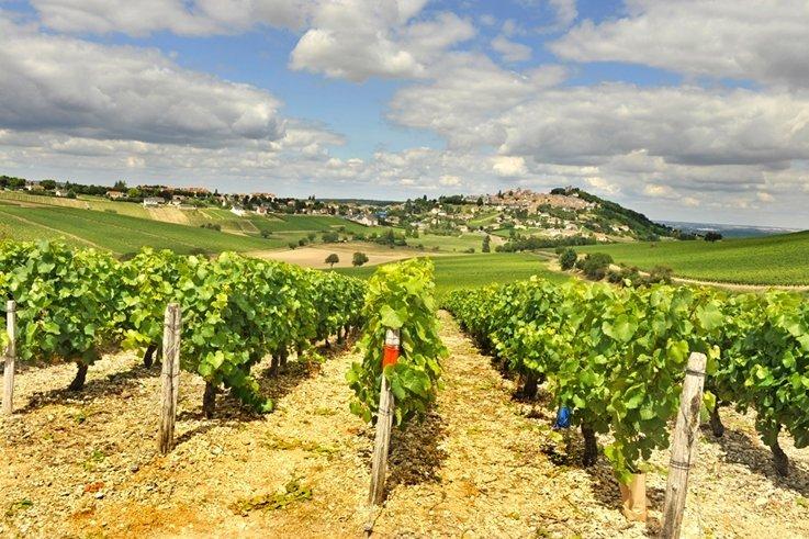 Sancerre Wine Fair