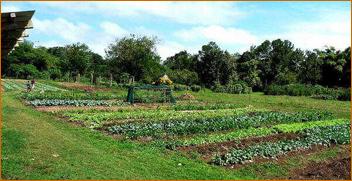 Naitauba garden