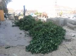 copaci taiati 30 iunie 2015 (3)