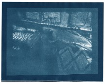 """Fig tree, cyanotype contact print of graphite drawing on vellum, 7.75"""" x 10"""", 2015"""