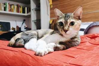 Kucing Cat Cimot