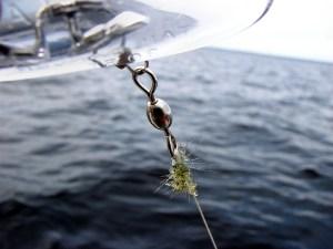 Spiny Water Fleas (J. Gunderson photo)