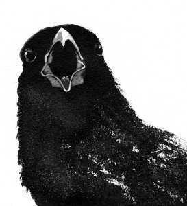 TOS_Crow