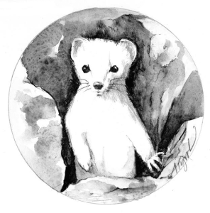 weasel the outsider
