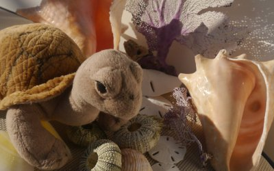 Tilly's Coral Garden