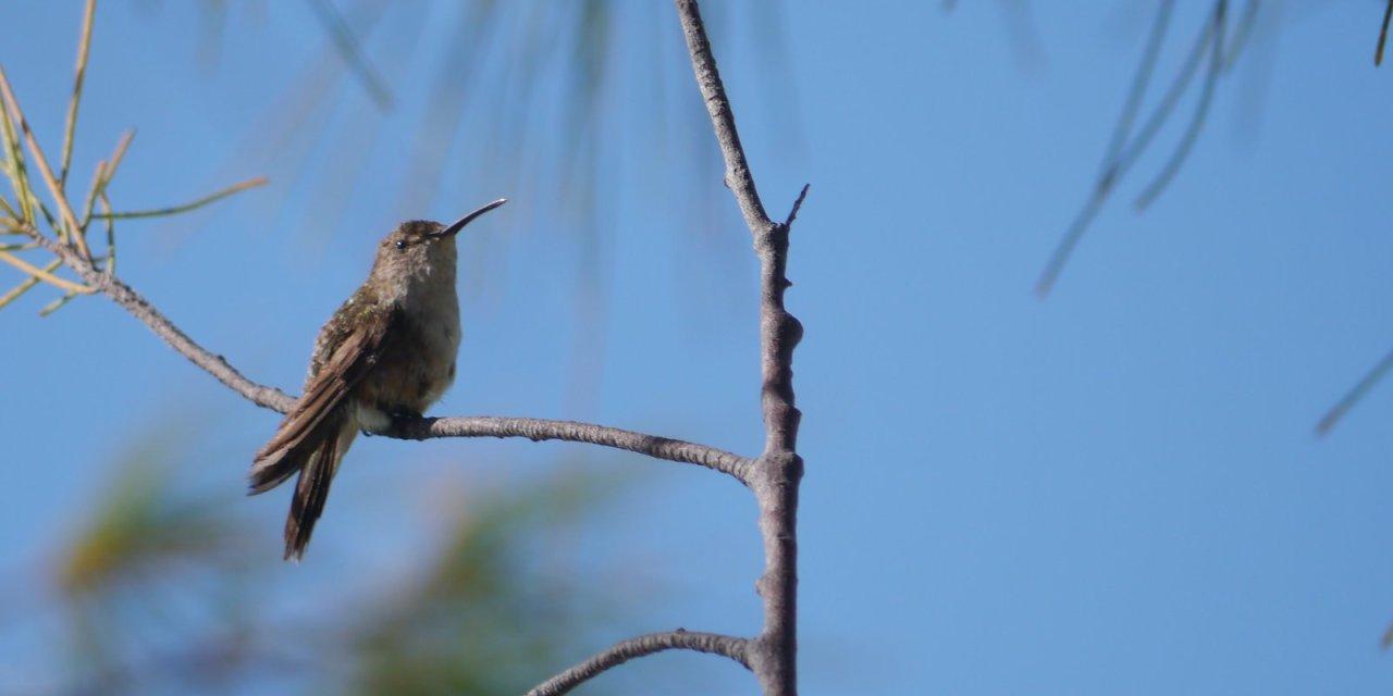 A Virtual Nature Trail – Bahamas – Part 1
