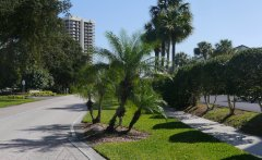 Liz liked the palm trees lining the boulevard in North Palm Beach