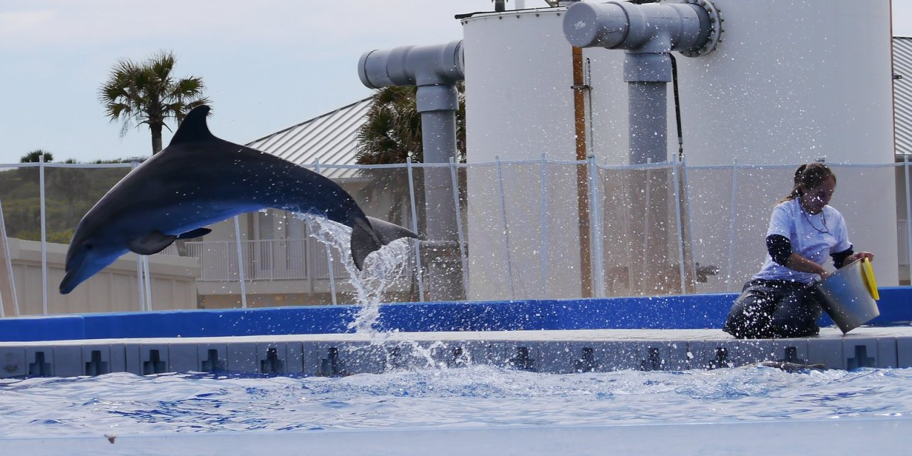 Dozens of Dolphins