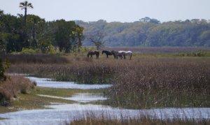 Wild horses roam free