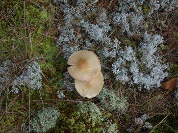 Pretty lichens and fungi