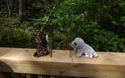 Grandkids Corner: Pooh Sticks in Pukaskwa Park