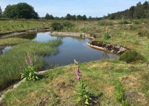 Vijverpartij De Wildakker, halverwege de Beek tussen het Bovenmeer en Tonnetjesdelle (Foto: Ad Lansink)