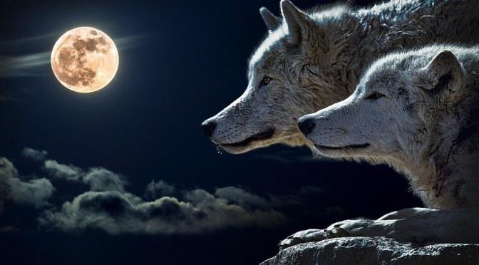 Farkasokkal futni – Takács Hajnal írása