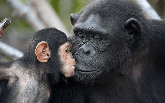 potd-gorilla_