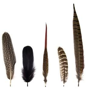 woodland-feathers