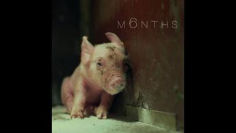 M6NTHS, la vita negli allevamenti in gabbia in un film