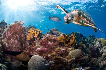 Pesca sostenibile e tutela degli oceani, Wwf a Fa' la cosa giusta