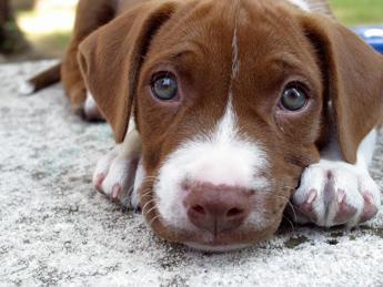Risultati immagini per cani