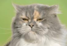 cat carefree 563.png