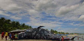 deadwhale.jpg