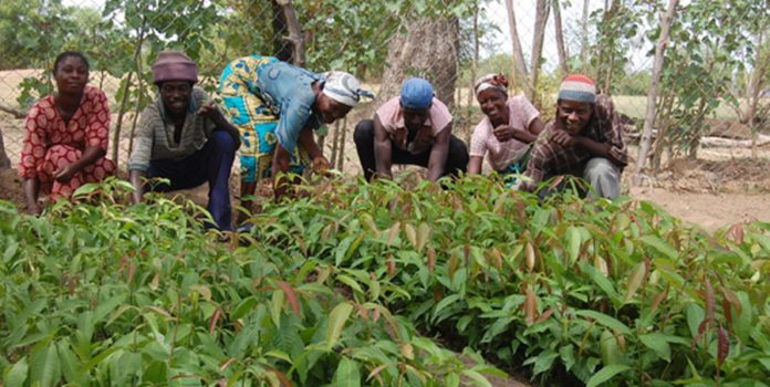 Farmers to boycott work for Agric Minister-designate's vetting 4