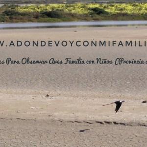 4 LUGARES PARA OBSERVAR AVES Familias con Niños (Provincia de Cádiz)