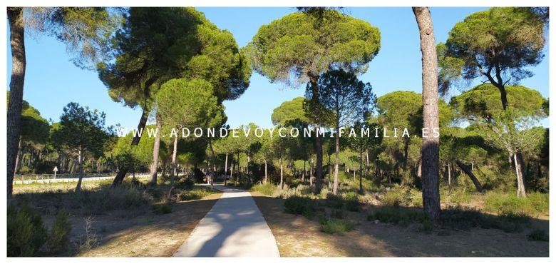 area recreativa pinar de la algaida adondevoyconmifamilia 06