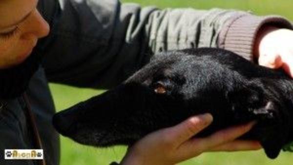 Adopciones de perros AUCMA