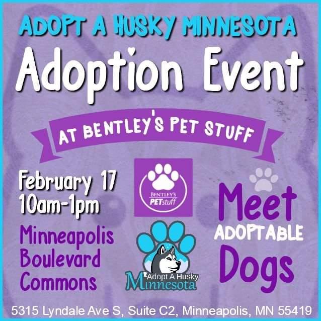 Adopt A Husky Minnesota Adoption Event
