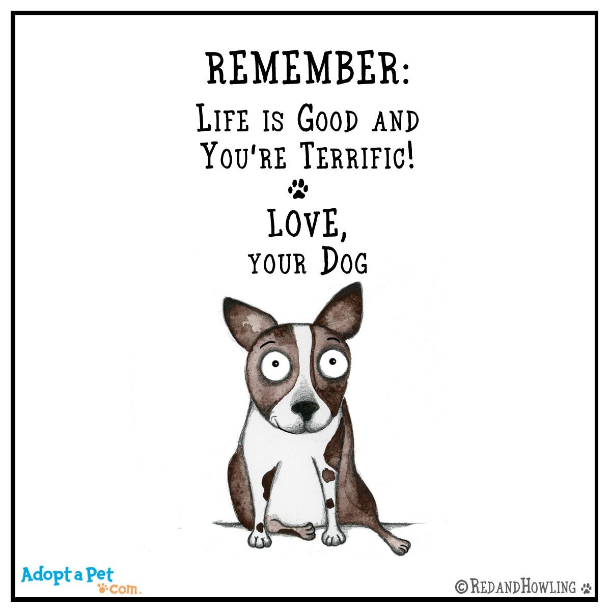 Adopt A Pet Blog New Cartoon Life Is Good