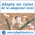Adopta un caine de la adapostul local